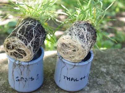 Plante utilisation Thalasève